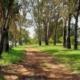 Zwartfontein oord tussen die bome